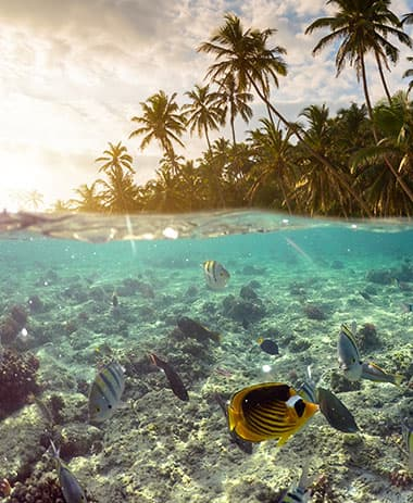 underwater-scene-with-reef-and-tropical-fish-ariellesboat-seychelles